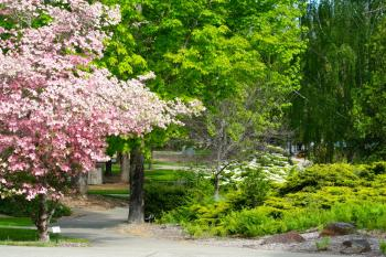 Redwood Campus in full bloom during the Spring